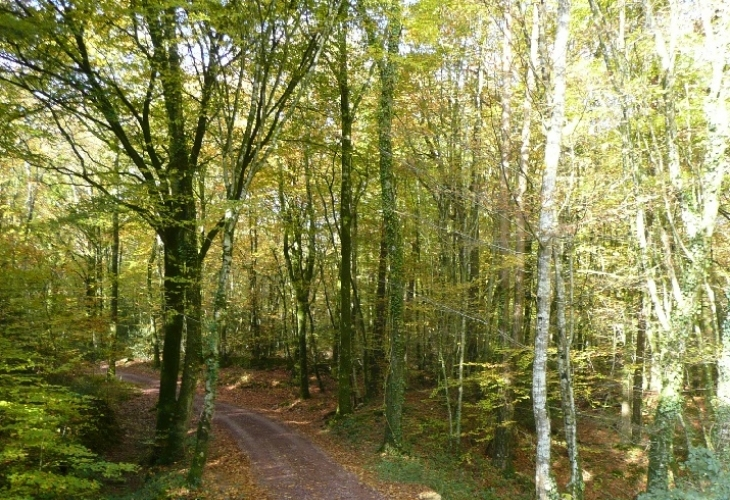 Brocéliande : un environnement naturel d'exception
